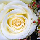 White Rose by Graham Taylor