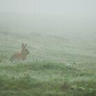 Rabbit in the Mist by Nigel Tinlin