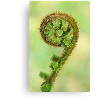 Scottish fern Koru Canvas Print