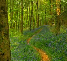 The Trail by phil hemsley