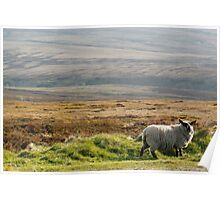 A Wicklow sheep Poster