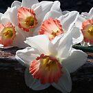 Beautiful Ladies Of Spring by kkphoto1