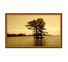 Cypress Tree in the Bay Art Print