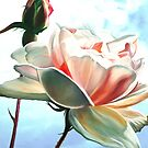 Sky Blue Pink - oil painting of a rose against the bright English sky by James  Knowles