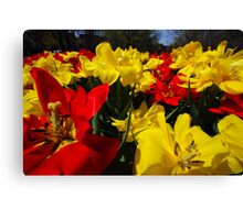 Double Something? Canvas Print
