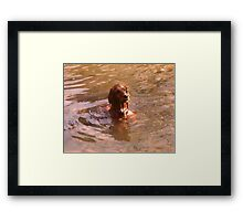 Where Did That Fish Go! Framed Print