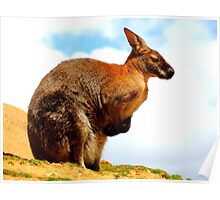 Wallaby from Below Poster