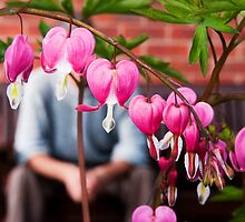 The Gardener Heart. by CJTill
