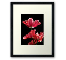 A Hot Pink Pirouette Framed Print