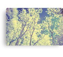 Shiny Trees Canvas Print