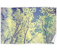 Shiny Trees Poster
