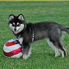 Who Wants To Play Soccer? by eleanor p.  labrozzi