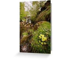 Spring at Scale Haw Greeting Card