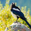 Morning Light Of The Magpie by John  De Bord Photography