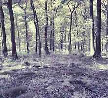 Forest Panorama by Guy Carpenter