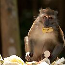 Long Tailed Macaque by Matthew Walters