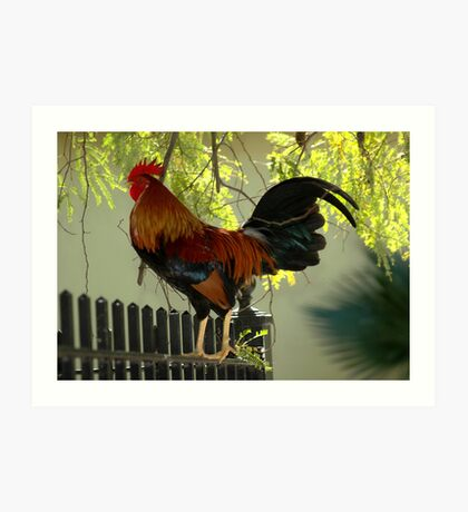 Rooster Rooster Crowing Out Loud Art Print