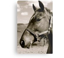 His Lordship. Metal Print