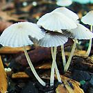 little mushrooms by ANNABEL   S. ALENTON