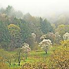 Foggy Landscape by outlawboy2