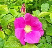 Fuchsia flower by MONIGABI