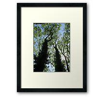 Treetops Framed Print