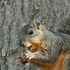 squirrel eating by Robert Brown