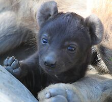 Hyena cub  by DutchLumix
