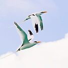 Longtail Duet by Lucy Hollis