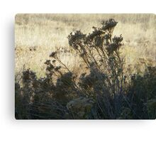 Light and Shadow Canvas Print