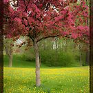 Pink tree in spring by Denis Charbonnier