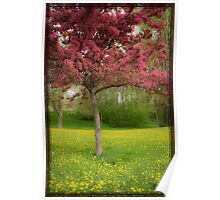 Pink tree in spring Poster