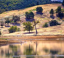 Lake Moyanup in late summer by Craig A. White (Australia)