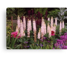 Cottage Garden, Lupin border, UK. Canvas Print