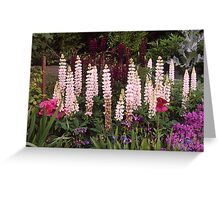 Cottage Garden, Lupin border, UK. Greeting Card