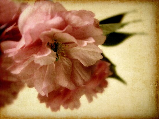 Burnished Blossom by Jessica Jenney