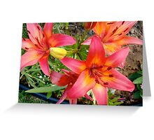 Red and yellow Tiger Lilies Greeting Card
