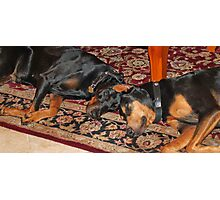 Sleeping buddies Photographic Print