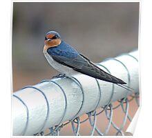 Bird on a fence at Mundaring Weir Poster