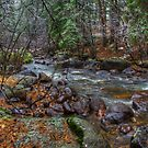 Mountain Stream - Rocky Mountain National Park by Mike Capone