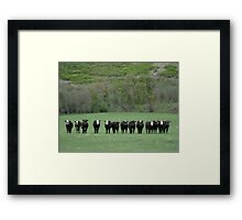 Moo Shot Framed Print