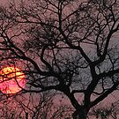 Every african sunset is special! by jozi1