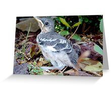 "Baby Bird in the Spring, Learning ""the ropes"" Greeting Card"