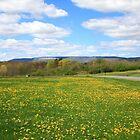 Field of Dandelion by Melissa Ann Blair