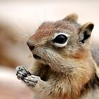 Golden Mantled Ground Squirrel (3) by Lori Peters
