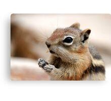 Golden Mantled Ground Squirrel (3) Canvas Print