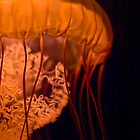 West Coast Sea Nettle by Celeste Mookherjee