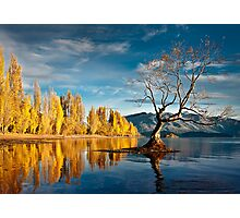 Wanaka Tree Photographic Print