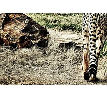 Dreaming for Mother Africa (3) Photographic Print