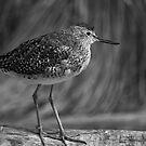 Lil Bird... by Nathalie Chaput